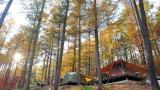청옥산 자연휴양림 야영장 작은 사진