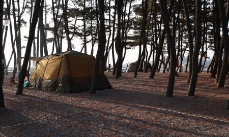 몽산포 오토캠핑장 2구역 작은이미지