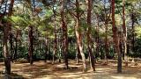 솔바다 카라반 캠핑장 작은 사진