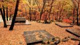 도사곡 휴양림 야영장 작은 사진